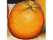 Fruta en la mezcla de torta inferior